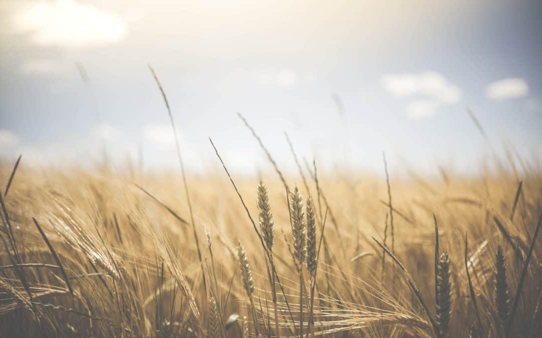 Retorno al SER que somos | Alimentación y Paz, por el  Dr. Jorge Iván Arango Caro