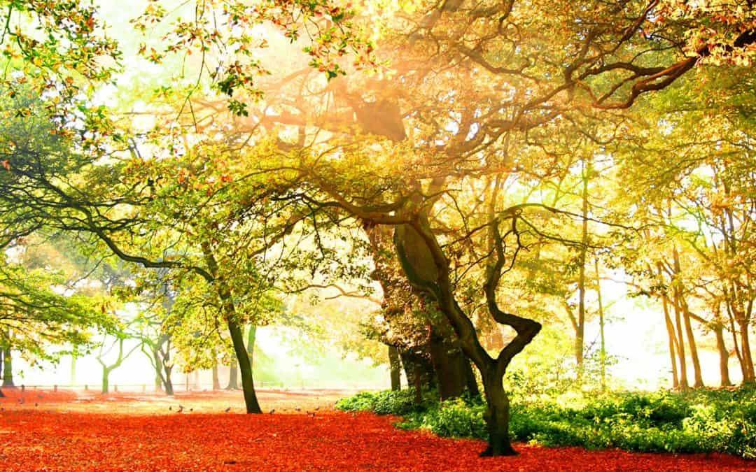 Retorno al SER que Somos | Geobiología: El carácter del lugar sagrado