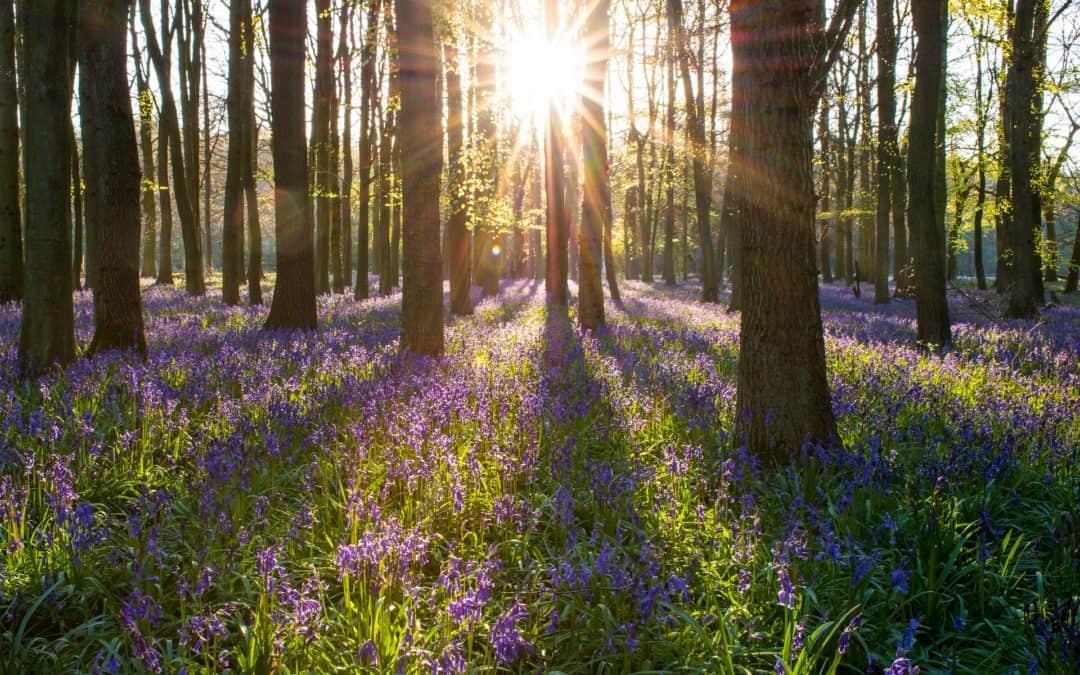 Conexión natural, un aporte a la vida y la paz