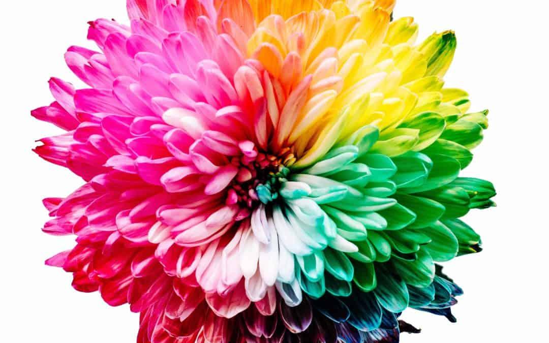 La vida en color