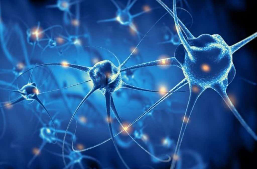 Seis Formas De Mantener Joven Tu Cerebro