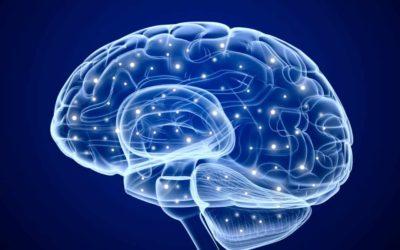 Neurofisiología de la Unidad Mente-Cuerpo en Sintergética