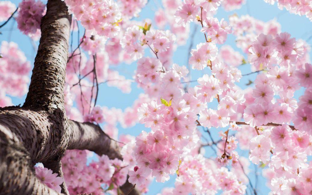 Canto de primavera
