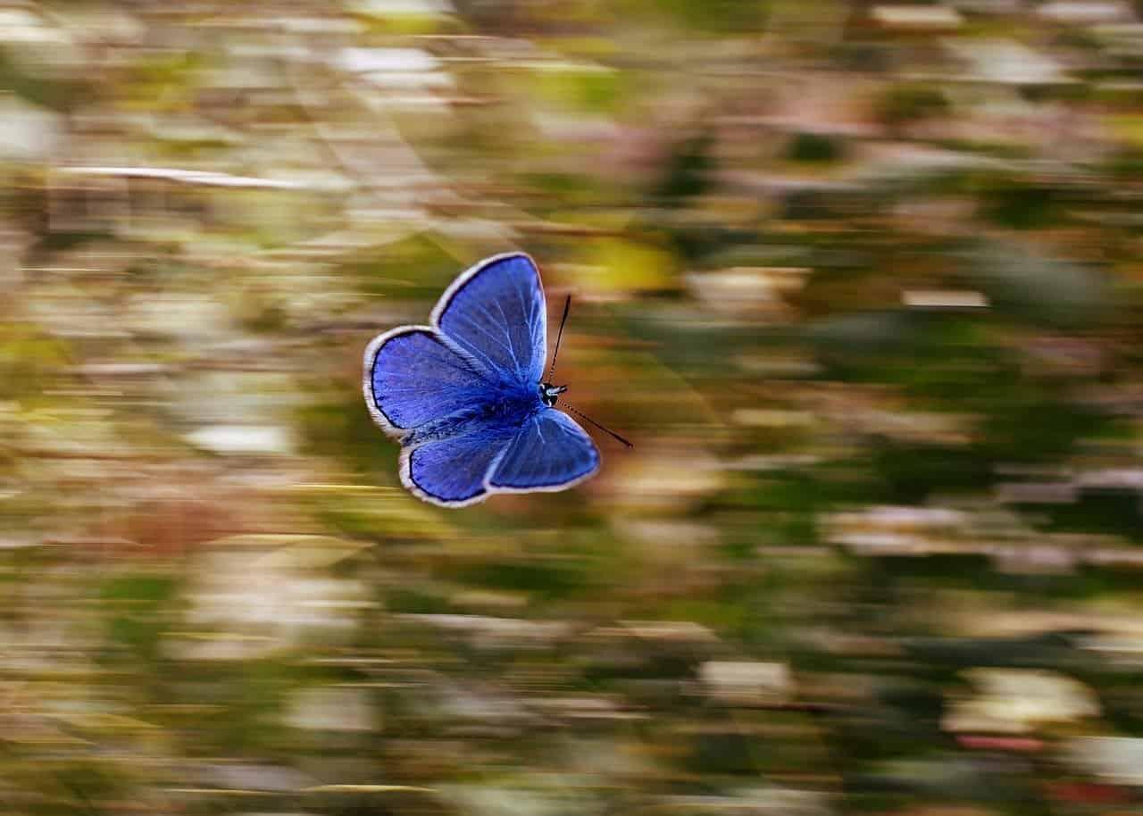 Despertar desde la crisálida. Convierte tus desafíos en poderosas alas.